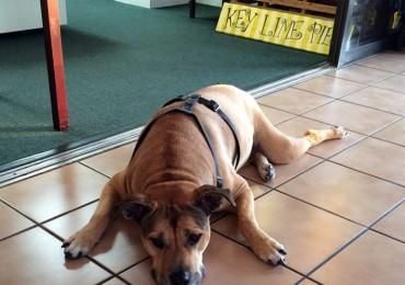 shane-dog-marathon-airport-florida-keys-770x800.jpg