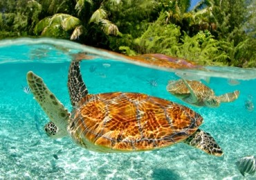 south-pacific-tourism-organisation-turtle.jpg