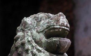 lionhead-300x185.jpg