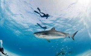 sharks-300x185.jpg