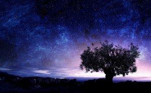 starmain-300x185.jpg