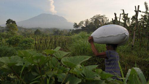 2017-12-06t050218z_1786605597_rc1ca5ed5c80_rtrmadp_3_indonesia-volcano-504x284.jpg