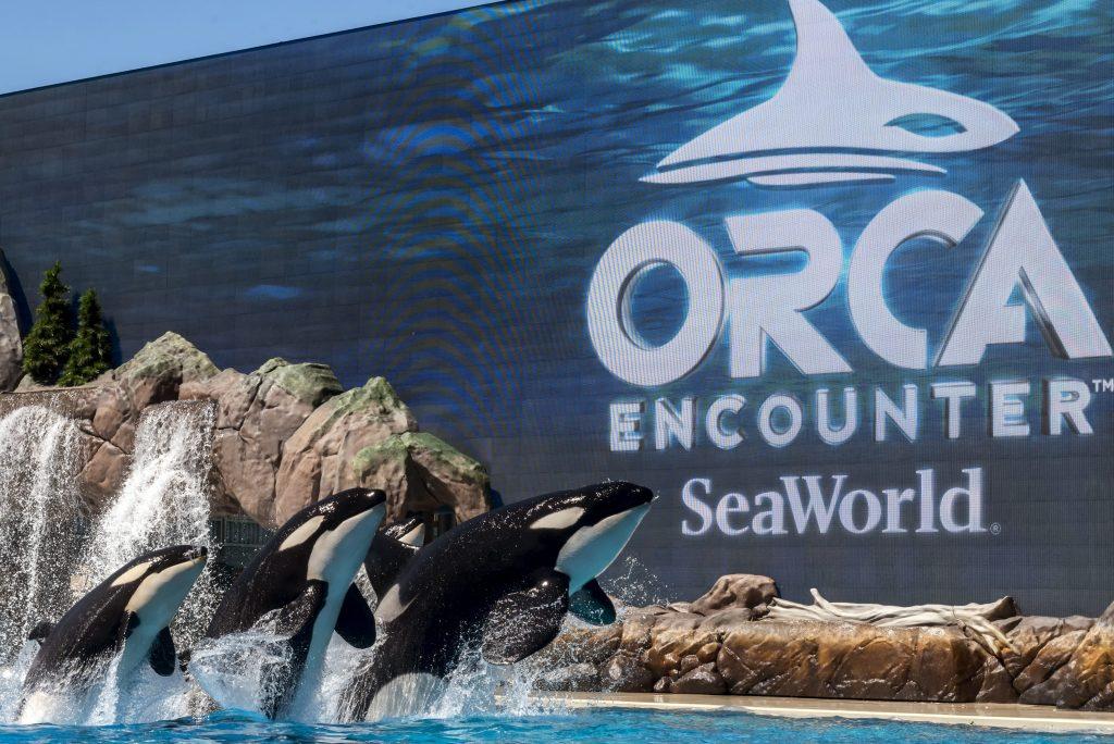 orca-encounter-2-e1519958501172.jpg
