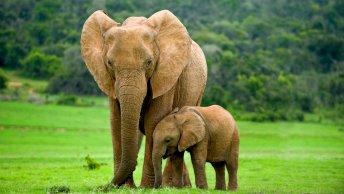 Tourism elephants
