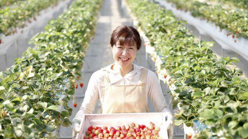 japan-fruit-picking-strawberries-504x284.jpg