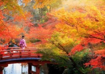 japan-colors-504x284.jpg